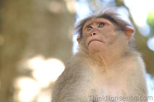 The Monkey Menace
