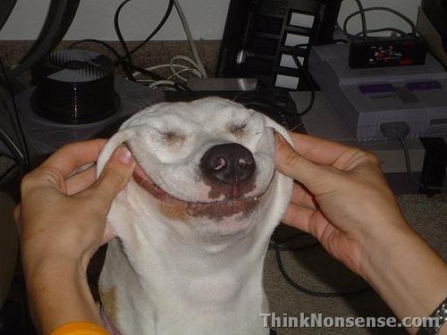 Dawgs smile