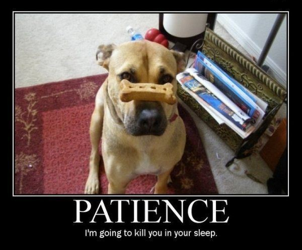 dogpatience