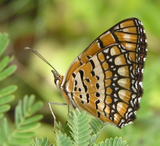 live like butterfly