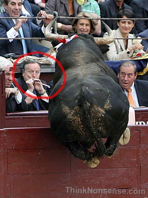 bull-surprise